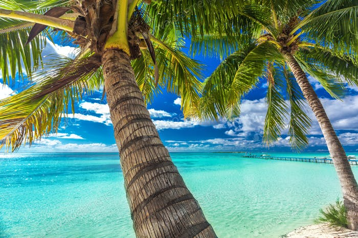Beach with palm trees on the north side of tropical Moorea islan