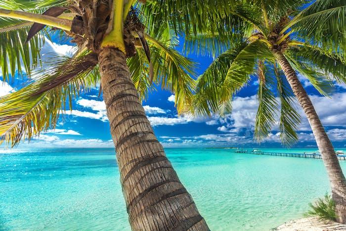 Strand mit Palmen auf der Nordseite des tropischen Moorea-Islan
