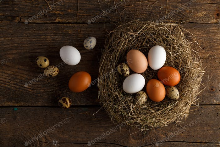 Fresh chicken and quail eggs in a nest on a wooden background