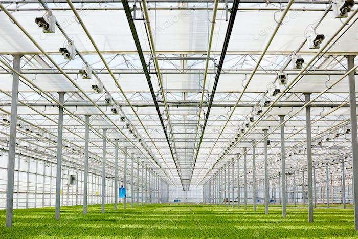 Vegetation in greenhouse