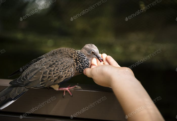 Closeup of hand feeding the bird