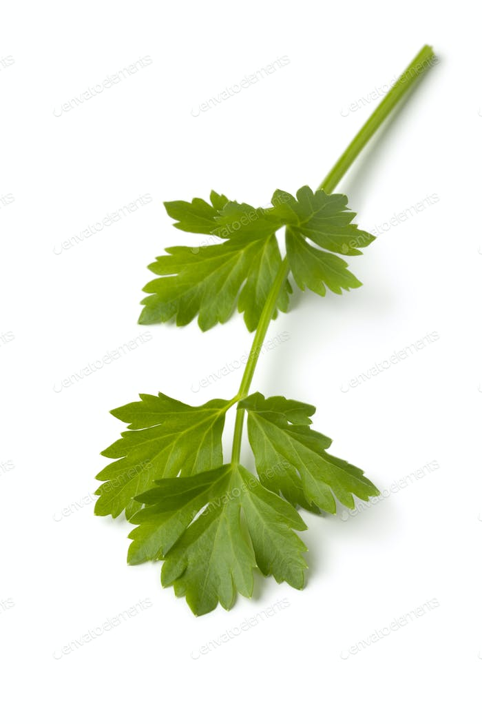 Single twig of fresh green lovage