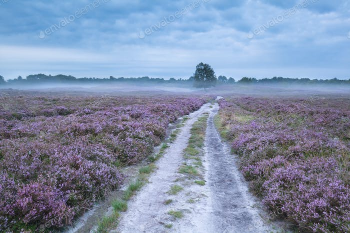 road between pink flowering meadows with heather