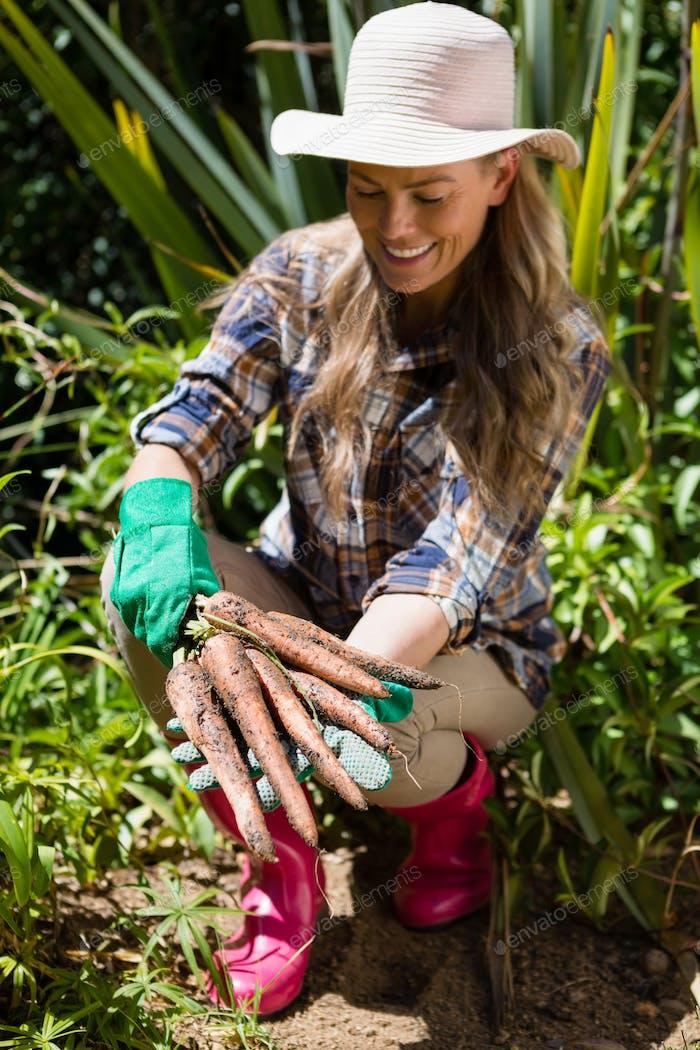 Glückliche Frau hält geerntete Karotten im Feld
