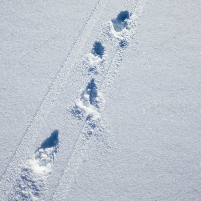 Tracks left by skiers,impressions of skis and poles in deep snow
