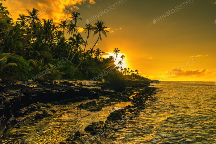 Coconut palm trees on beach during the sunrise on Upolu, Samoa I