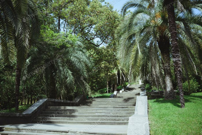 landscape with trees and stairs in arboretum sochi