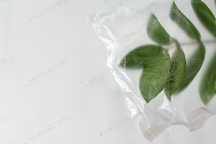 Plant leaves in plastic bag