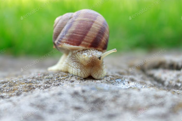 Snail animal life in nature on the green grass.
