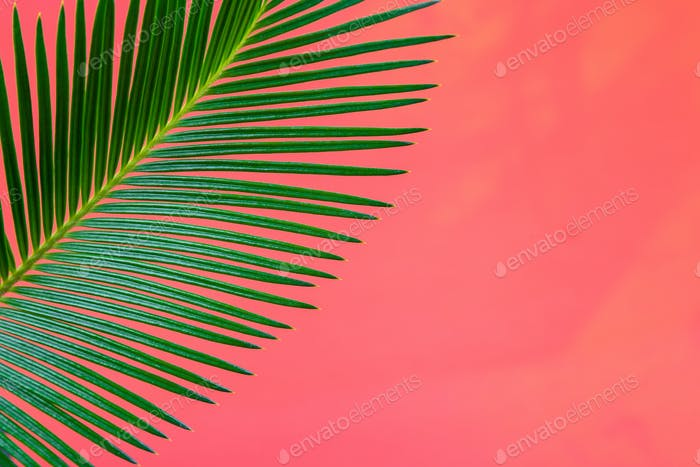 Tropical Background Palm Trees Branches. Holiday. Travel. Copy space.