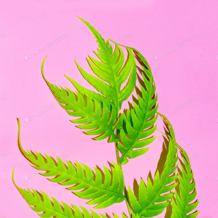 Tropical plant on pink. Collection. Stylish minimal design