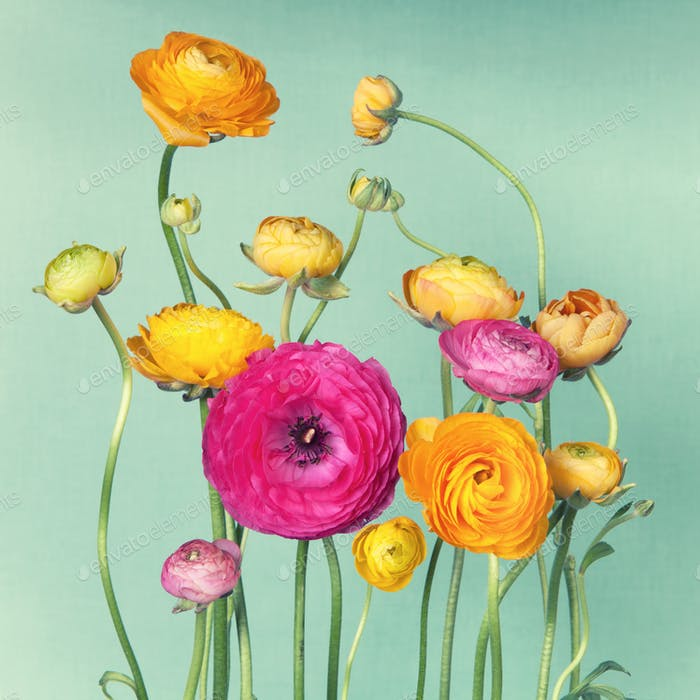Flower arrangement of ranunculuson