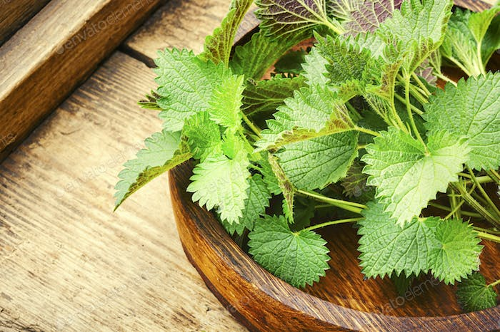 Stinging nettle leaves