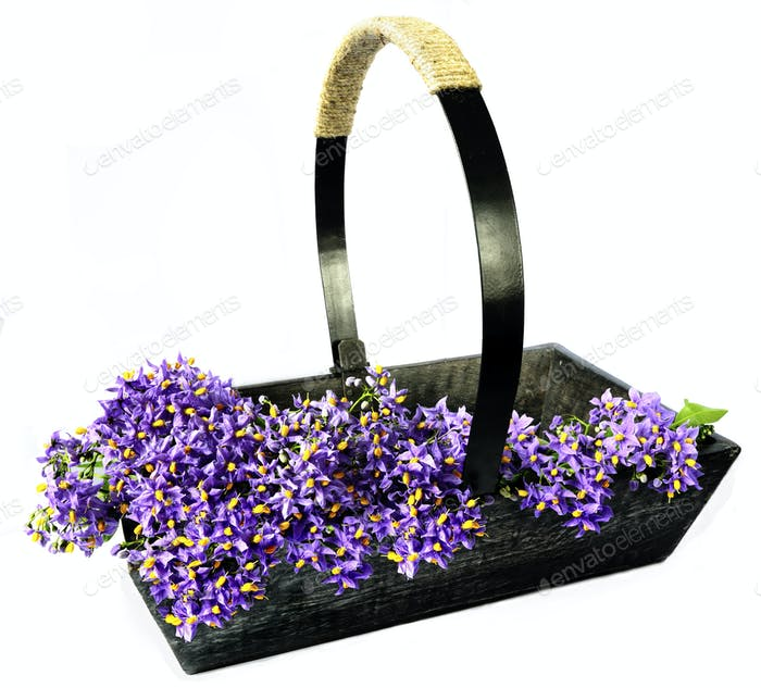 Garden Trug Filled with Blossom