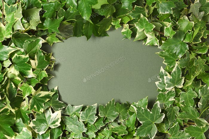 Frame of ivy branches