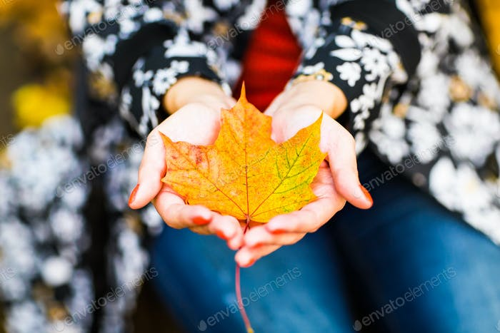 autumn yellow maple leaf on hands