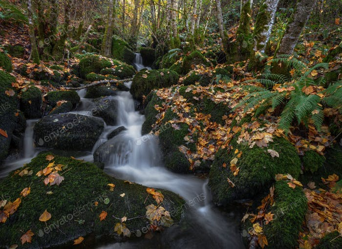 A stream jumps between moss covered stones