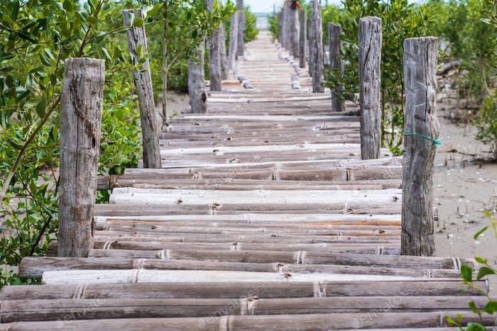 Wooden bridge over mangrove forest.