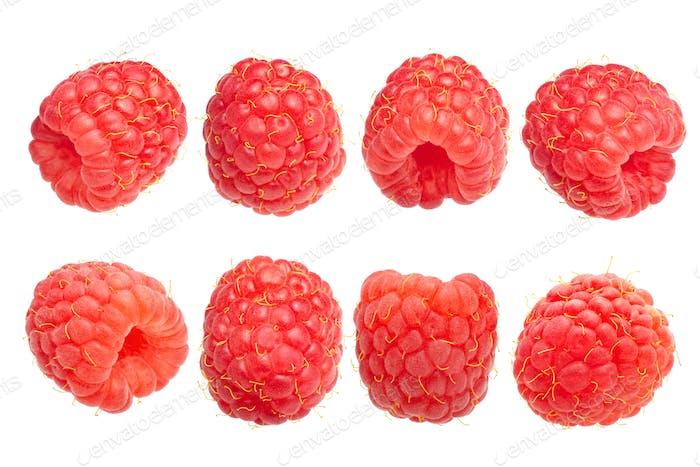 Raspberry r. idaeus fruits, paths
