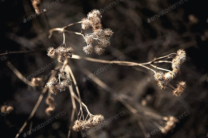 Beautiful old dried flowers on the road background
