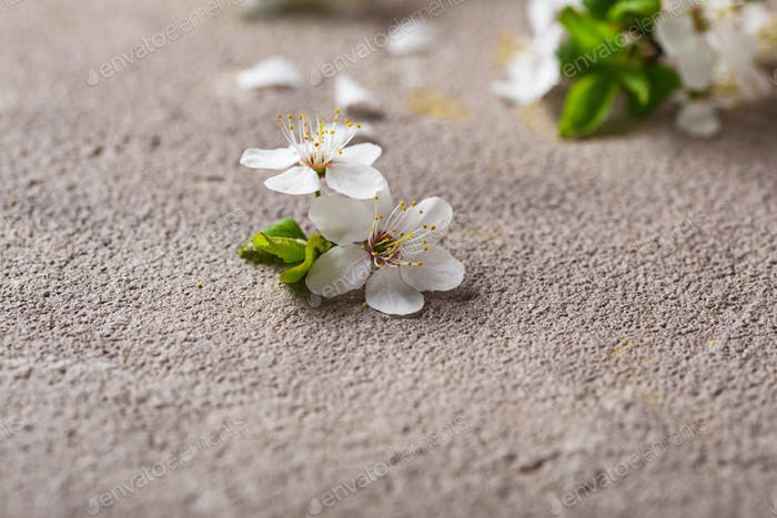 Cherry blossom on beige background