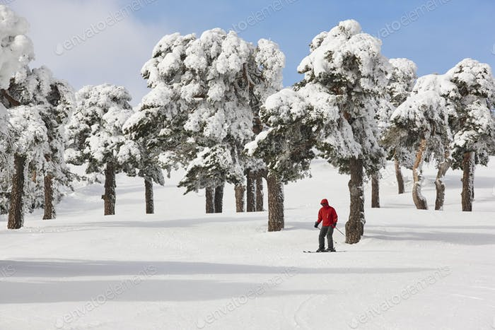 Skiing on a beautiful snow forest landscape. Winter sport. Horizontal