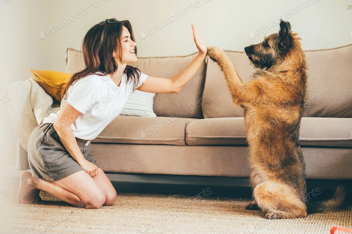 Grey dog follows orders of positive brunette woman owner on floor near soft sofa at home.