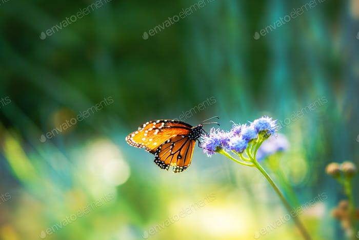 Summer Meadow Butterfly