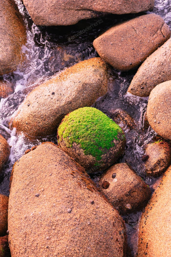 Lonely rock full of algae surrounded by nude rocks