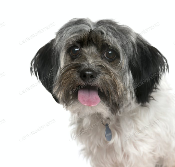 Close-up of a Mixed-breed Dog panting, Dog, pet, studio photography, cut out