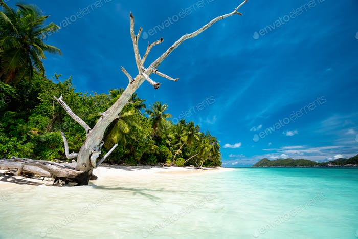 Surreal view with dry tree trunk on sandy beach with palm trees and blue lagoon and sky