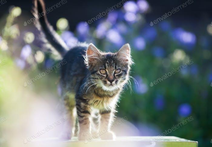Kitty cat posing