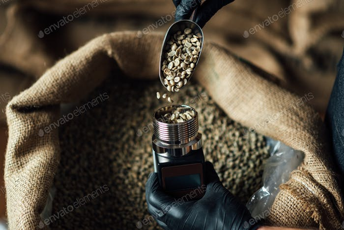 pouring coffee beans into a moisture measuring device using a metal scoop on burlap bag background.