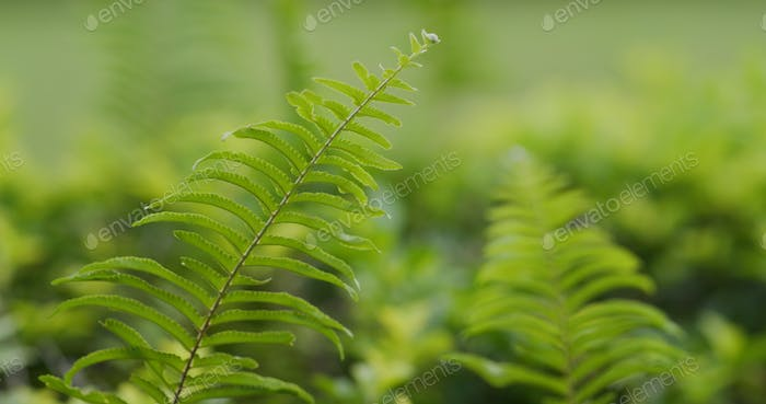 Green fern plant in tropical forest