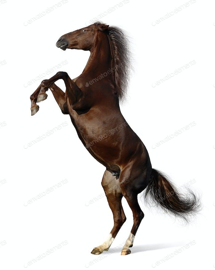 Budenny Horse Rear