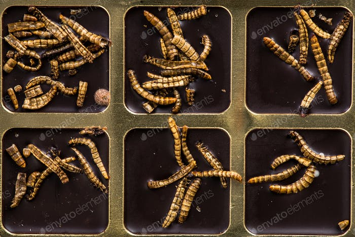 Chocolate with edible insects and worms, alternative food