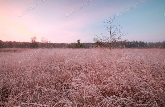 frosty autumn sunrise