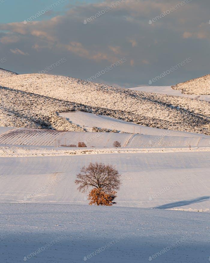 Tree In A Snowy Field 3