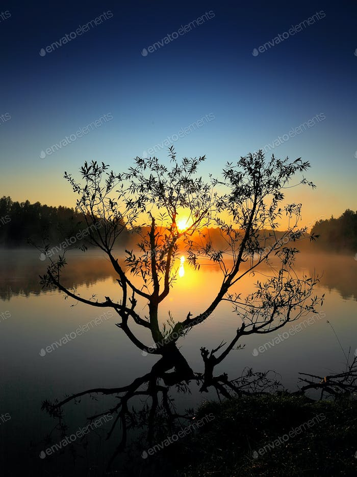 Lonely tree growing in a pond at sunrise