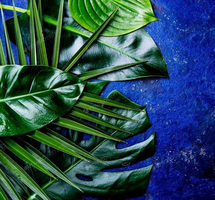 Creative tropical leaves background. Trandy tropical leaves on blue slate background - color of the