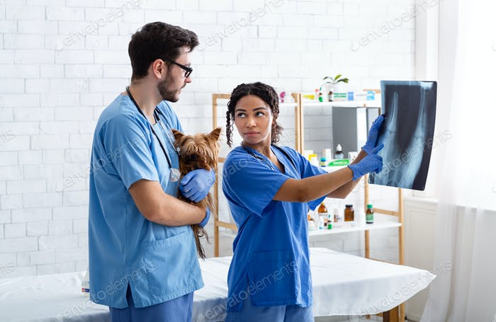 Tierradiographie. Erfahrene Tierarztpraxis und Assistentin mit niedlichen Hündchen Lesen Röntgen im Krankenhaus