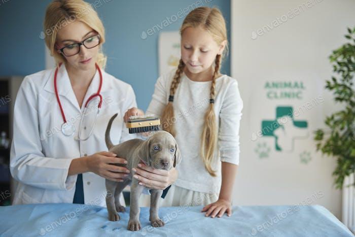 Brushing dog's fur at the vet