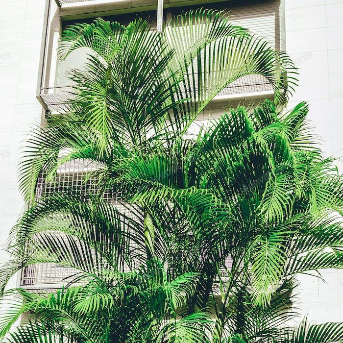 Palm tropical fashion mood