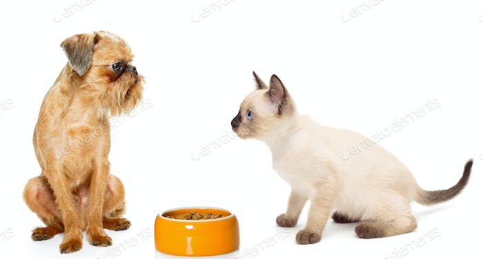 Kitten and puppy with a bowl of dry food