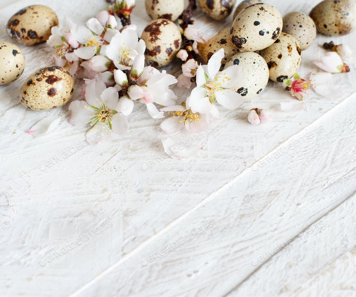 Quail eggs and almond flowers