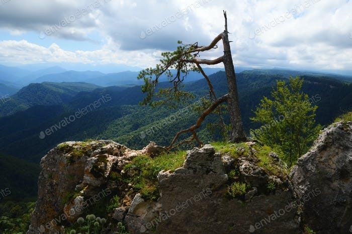 Lonely broken pine in mountains