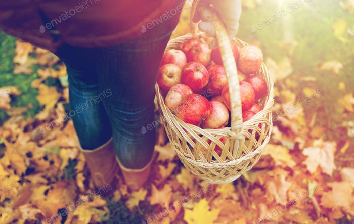 woman with basket of apples at autumn garden