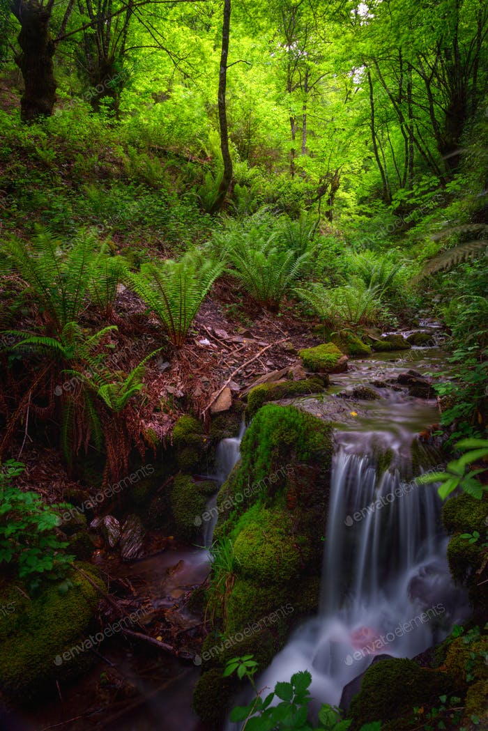 Stream between ferns in a forest