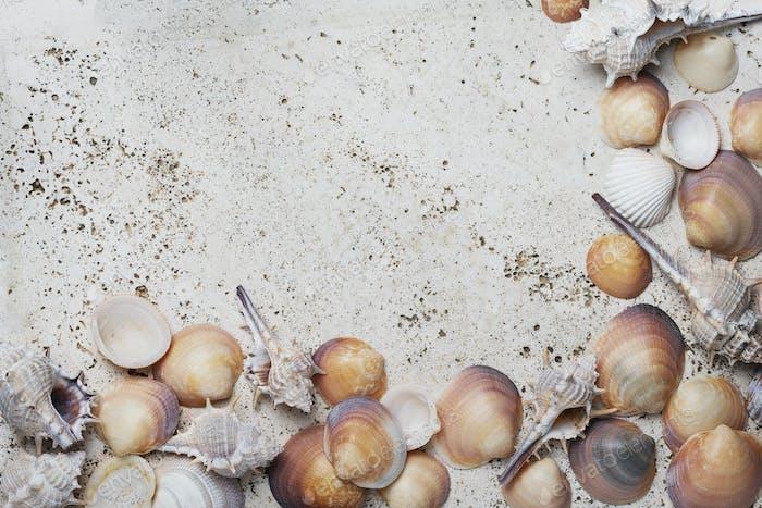 Seashells on the light marble background