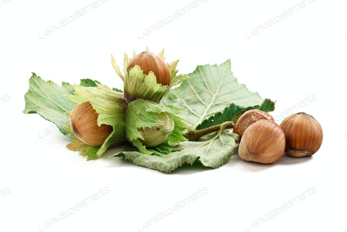 bunch of hazelnuts